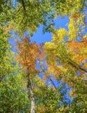 Feuilles sur des arbres en automne Photographie stock libre de droits