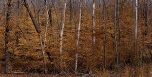Feuilles sur des arbres en hiver Photographie stock
