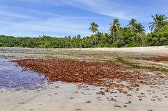 Feuilles sur la plage, en île Salvador de Boipeba, le Brésil images libres de droits
