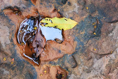 Feuilles sur la roche Photos stock