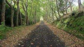 Feuilles sur la route dans Graciosa, Açores image stock
