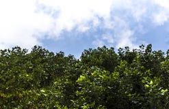 Feuilles sur le ciel Photos stock