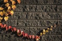 Feuilles sur les briques 2 Photos stock