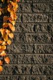 Feuilles sur les briques 3 Image stock