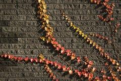 Feuilles sur les briques 5 Photo libre de droits