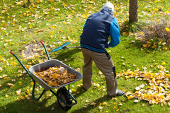 Feuilles sur une herbe pendant l'automne Image libre de droits