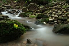 Feuilles sur une pierre en rivière Photos stock