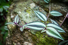 Feuilles sur une roche dans la forêt Photographie stock libre de droits