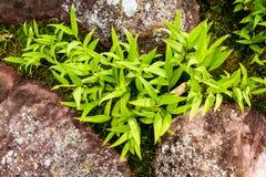 Feuilles sur une roche dans la forêt Image libre de droits