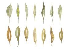 Feuilles tirées par la main d'aquarelle réglées d'isolement sur le blanc Placez les éléments d'usines Vert Type d'aquarelle Photo stock