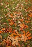 Feuilles tombées colorées Image stock