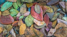Feuilles tombées colorées au sol image stock