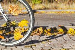 Feuilles tombées d'érable entre la roue de bicyclette spoked photo stock