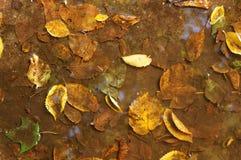 Feuilles tombées dans l'eau comme fond Photos libres de droits
