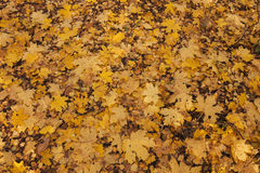 Feuilles tombées dans la forêt d'automne Photos libres de droits