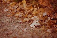 Feuilles tombées dans la forêt d'automne au temps ensoleillé Photographie stock