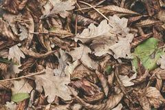 Feuilles tombées de châtaigne, érable, chêne, acacia Images libres de droits