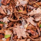 Feuilles tombées de châtaigne, érable, chêne, acacia Brown, rouge, orange et gren Autumn Leaves Background Photos libres de droits