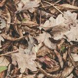 Feuilles tombées de châtaigne, érable, chêne, acacia Brown, rouge, orange et gren Autumn Leaves Background Couleurs douces Photographie stock libre de droits