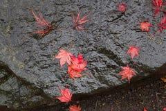 Feuilles tombées de rouge sur une roche décorative Photographie stock libre de droits