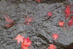 Feuilles tombées de rouge sur une roche décorative Images stock