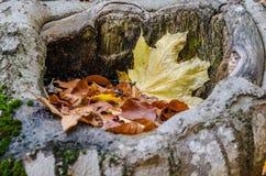Feuilles tombées en caverne de tronçon d'arbre Photo libre de droits