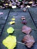 Feuilles tombées jaunes et brunes sur la terre moussue photographie stock libre de droits
