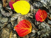 Feuilles tombées lumineuses sur les feuilles desséchées en gros plan Photos stock
