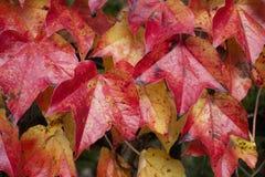 Feuilles tombées par automne comme papier peint Images libres de droits