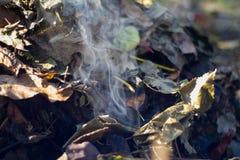 Feuilles tombées par automne en feu Image stock