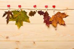 Feuilles tombées par automne goupillées sur la ficelle avec les goupilles minuscules avec des coeurs Concept de collection Érable Photos stock