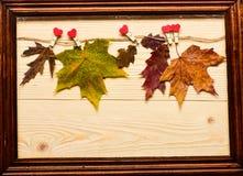 Feuilles tombées par automne goupillées sur la ficelle avec les goupilles minuscules avec des coeurs L'érable et le chêne ont séc Image stock