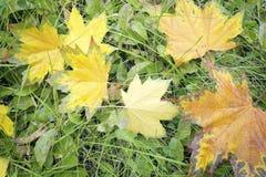 Feuilles tombées par automne sur l'herbe Photo stock