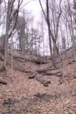Feuilles tombées par chemin de montagnes russes de colline de forêt image stock