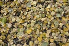 Feuilles tombées pendant l'automne Photographie stock