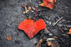 Feuilles tombées sèches, courbé et rouge Image libre de droits