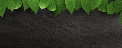 Feuilles tombées sur le fond foncé d'ardoise Feuilles tombées par automne coloré Image libre de droits