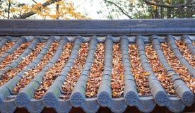 feuilles tombées sur le toit carrelé images libres de droits