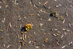 Feuilles tombées sur le trottoir - fond abstrait de nature Photo libre de droits