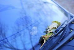 Feuilles tombées sur une fenêtre de voiture Photographie stock libre de droits