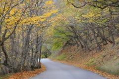 Feuilles tombées sur une route de montagne dans la forêt d'automne Image libre de droits