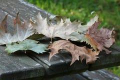 Feuilles tombées sur une table de pique-nique en bois Photographie stock