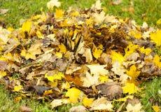 Feuilles tombées, un arbre avec les feuilles jaunes, un automne pluvieux, une feuille humide Photos stock