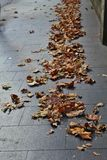 Feuilles tomb?es sur le trottoir photo libre de droits