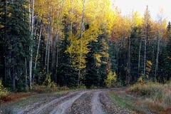 Feuilles tombant en automne près d'une route de gravier image stock
