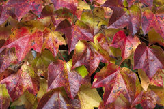 Feuilles tombées par automne comme papier peint Image stock