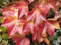 Feuilles tombées par automne comme papier peint Photo libre de droits