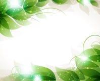Feuilles transparentes de vert Photos stock