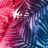 Feuilles tropicales avec vibrant, fond de couleur de gradient Idées de concepts de nature et d'été Pour la décoration images libres de droits