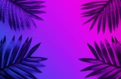 Feuilles tropicales avec vibrant, fond de couleur de gradient Idées de concepts de nature et d'été Pour la décoration photographie stock